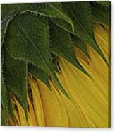 Prickly Canvas Print