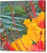 Pride Of Barbados Photo Canvas Print