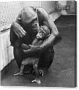 Primate Discipline Canvas Print