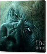 Primate Eyes Canvas Print