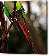 Princess Parrot On A Tree. Canvas Print