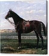Prize Horse Canvas Print