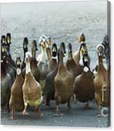 Professional Ducks 2 Canvas Print