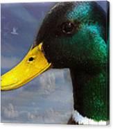 Profile Of A Mallard Canvas Print