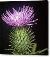 Profile Of Pruple Thistle Canvas Print