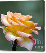 Profile View Yellow And Pink Rose Canvas Print