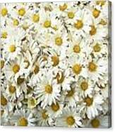 Profusion White Canvas Print