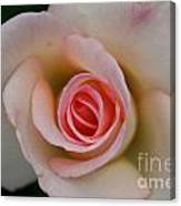 Promise Of Pink Canvas Print