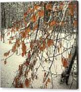 Prospect Park Winter Scene Canvas Print