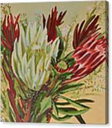 Protea Bunch Canvas Print