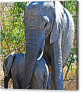 Protective Mother Elephant In Kruger National Park-south Africa Canvas Print