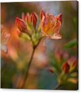 Proud Orange Blossoms Canvas Print