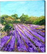 Provence Corner 2 Canvas Print