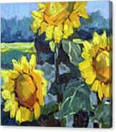 Provence Sunflower Trio Canvas Print