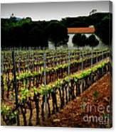 Provence Vineyard Canvas Print