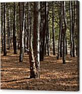 Provin Trails Park Forest Canvas Print