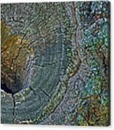 Pruned Limb On Live Oak Tree Canvas Print