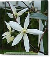 Psalm Eighteen Two White Clematis Canvas Print