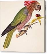 Psittacus Accipitrinus Canvas Print
