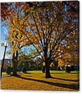 Public Garden Fall Tree Canvas Print
