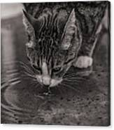 Puddle Drinking Kitty Canvas Print