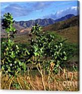 Puerto Rico Cayey Mountains Near Salinas Canvas Print