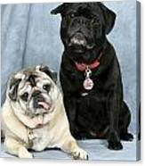Pug Buddies In Color Canvas Print