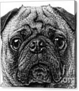 Pug Dog Black And White Canvas Print