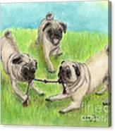 Pug Dog Playing Canine Animal Pets Art Canvas Print