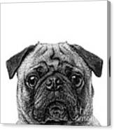 Pug Dog Square Format Canvas Print