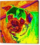 Pug Portrait Pop Art Canvas Print
