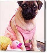 Pug Puppy Bath Time Canvas Print