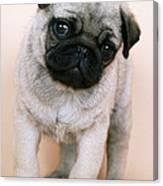 Pug Puppy Dog Canvas Print