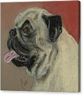 Pugster Canvas Print