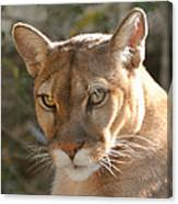 Puma Closeup Canvas Print