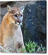 Puma On The Watch Canvas Print