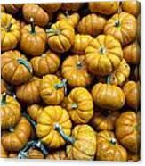Pumpkin Galore. Canvas Print