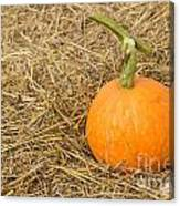 Pumpkin On The Straw  Canvas Print