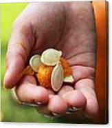 Pumpkin Seed Canvas Print