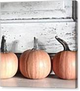 Pumpkin Trio Canvas Print