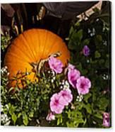 Pumpkin With Purple Flowers Canvas Print
