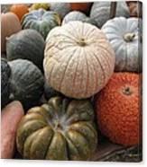 Pumpkins And Gourds Canvas Print
