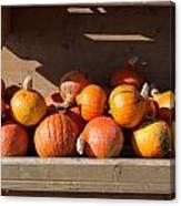 Pumpkins For Sale Canvas Print