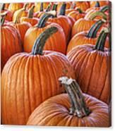 Pumpkins Galore - Autumn - Halloween Canvas Print