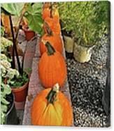 Pumpkins In A Row Canvas Print