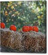 Pumpkins Canvas Print