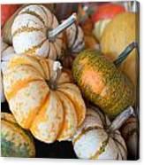 Pumpkins On Pumpkin Patch Canvas Print