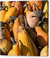 Pumpkins Up Close Canvas Print