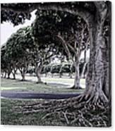 Punchbowl Cemetery - Hawaii Canvas Print