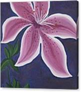 Punctilious Pink Daylily Canvas Print